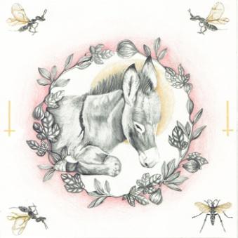 album cover neilcampau