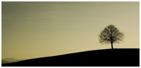Photography |Art Of TheWeek